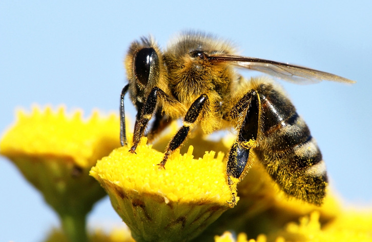 uk-scientists-to-create-autonomous-robot-with-bee-brains